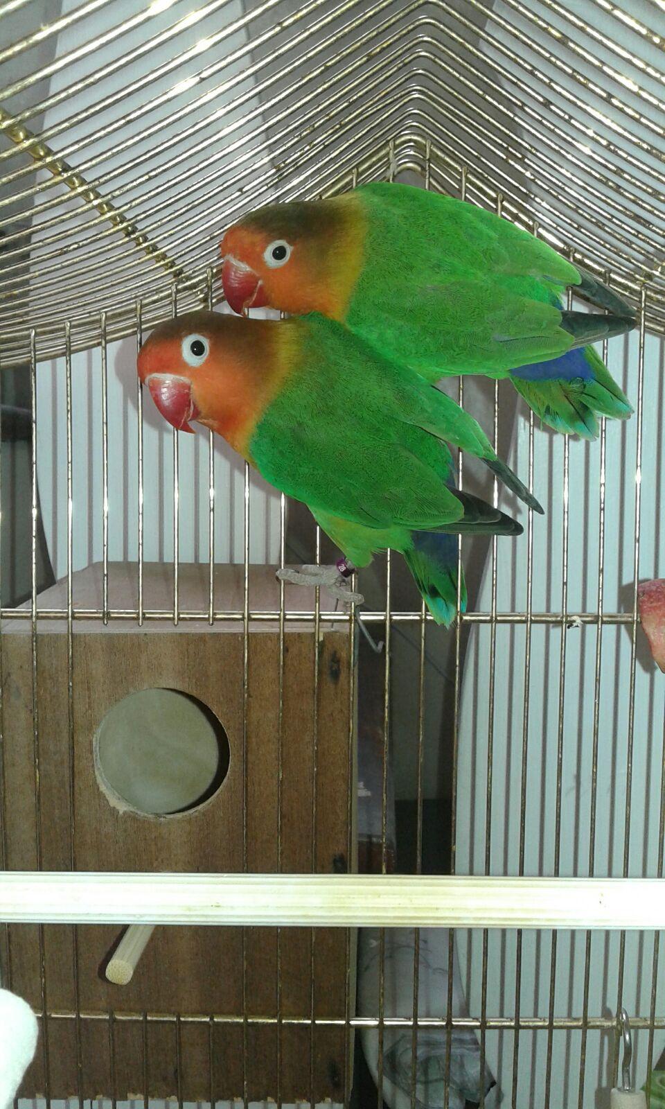 Kiwi e Ribes